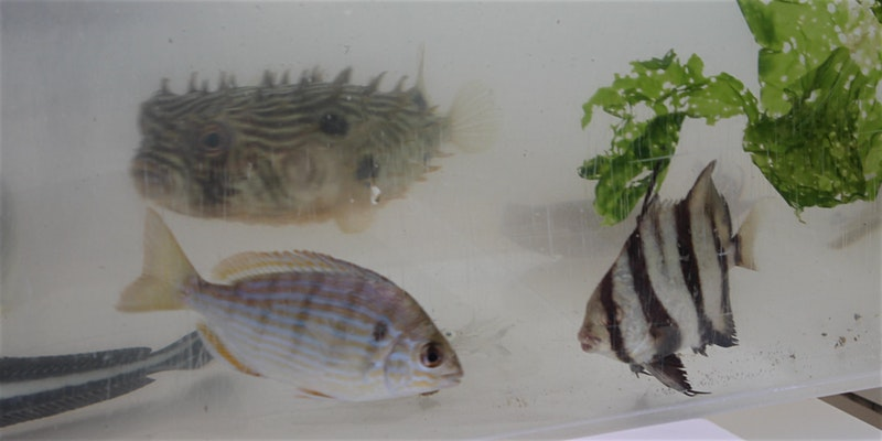 Homeschool Event: Fish in the Estuary!